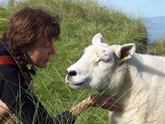 Jul & Sheep